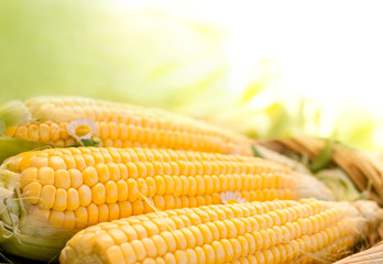 fresh corn in the basket