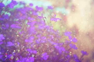 Pink and purple flowers bloom, glitter overlay