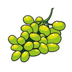 green grapes hand drawn fruits isolated vector