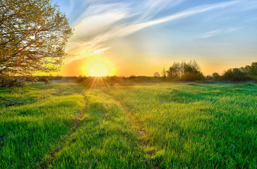 Landscape with the sunrise over the meadow