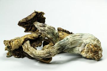Magic Mushrooms 5