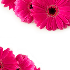 Printed kitchen splashbacks Gerbera Gerbera - pink