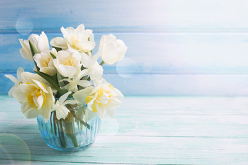 Background with fresh narcissus and tulips in blue vase