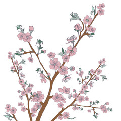 Flowering cherry branch on white. Vintage background