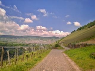 Weg durch einen Weinberg an der Mosel