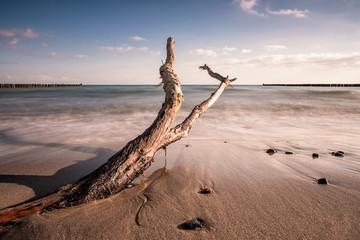 Fototapete - Treibholz an der Küste der Ostsee