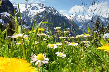 Fototapete - Bergblumenwiese