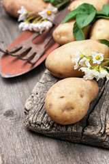 potatoes (toning)
