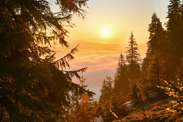 Morning forest in mountains