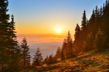 Foto op Canvas Bos Sunrise forest in spring mountains