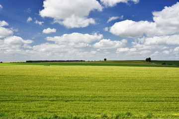 paysage de la Brie