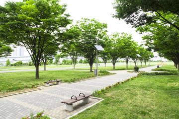 東京臨海広域防災公園 並木