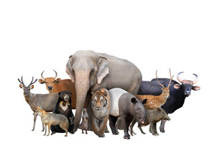 Wall Mural - group of asia animals
