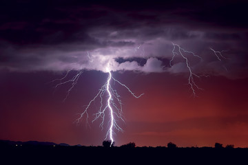 USA, Arizona, Arlington, Lightning striking a tree