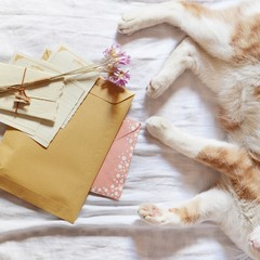 Cat and letters