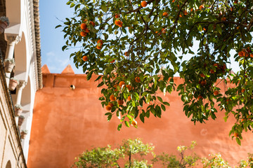 Spain, Seville,  Low angle view of orange tree against sky and coral wall