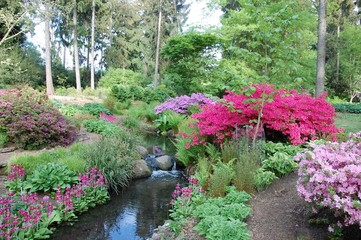 Photo sur Plexiglas Azalea Rhododendron and azalea