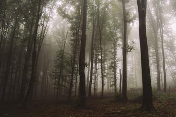 dark misty forest