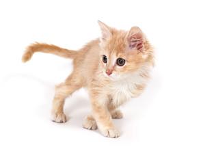cheerful redhead kitten playing