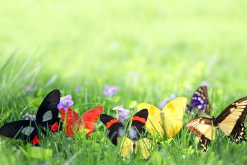 Exotic Butterflies Framing Green Grass Background
