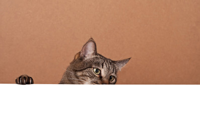 Cat peek out from behind white paper