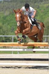 horse jumping