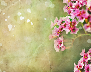 Little pink flowers with sunshine, spring romantic background