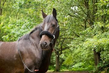Beautiful Horse Posing for Camera