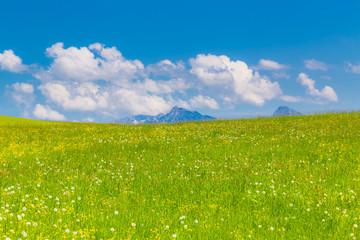 Berg mit Frühlingswiese in Bayern