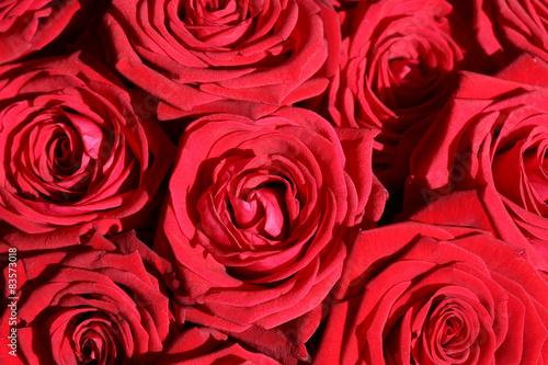 rote rosen stockfotos und lizenzfreie bilder auf bild 83573018. Black Bedroom Furniture Sets. Home Design Ideas