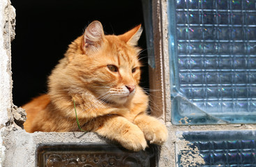 beautiful orange cat photo