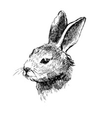 Hand drawn vector rabbit on white