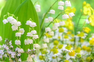 lily of the valley and chamomile