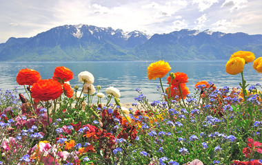 Spring flowers and mountains