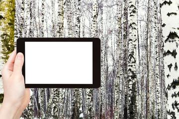 photo of russian snowy birch woods in winter