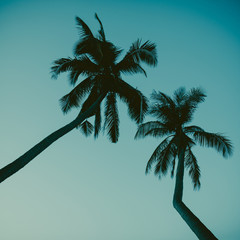 Palm tree silhouette vintage toned