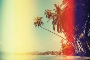 Retro filtered palm tree on tropical beach
