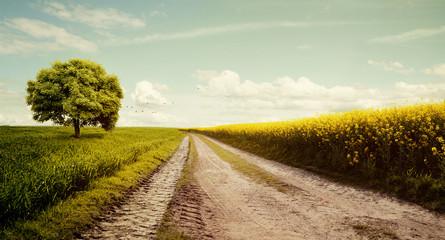 Feldweg mit Rapsfeld im Sommerlich