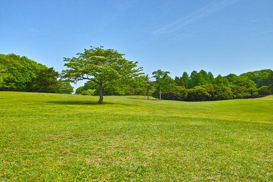 春の草原と森