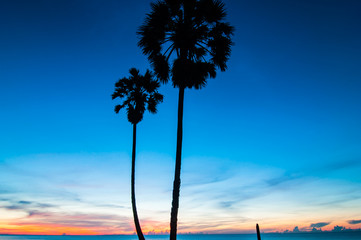 Sugar palm trees with light morning.
