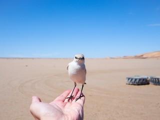 Bird - Namibian Desert
