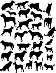 twenty eight black isolated on white dogs