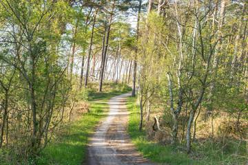 Waldweg zur Ostsee