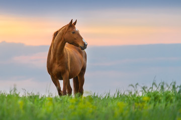 Beautiful red mare on green pasture against sunset sky Wall mural