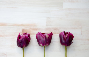 purple tulips on bright wooden background