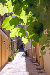Grape vines in front of houses