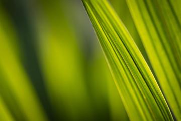 Grünes Gras vor unscharfem Hintergrund