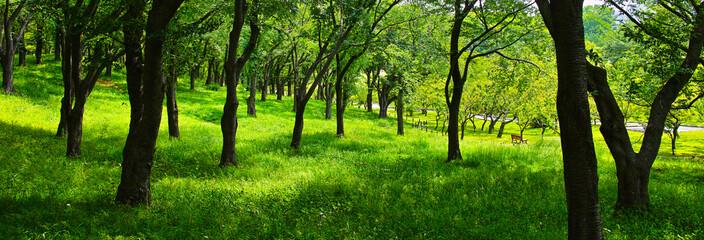 木漏れ日の新緑の森