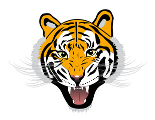 Tiger anger head on white background