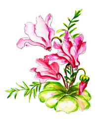 Cyclamens. Watercolor painting.